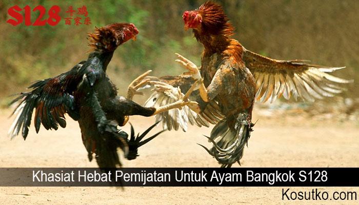 Khasiat Hebat Pemijatan Untuk Ayam Bangkok S128