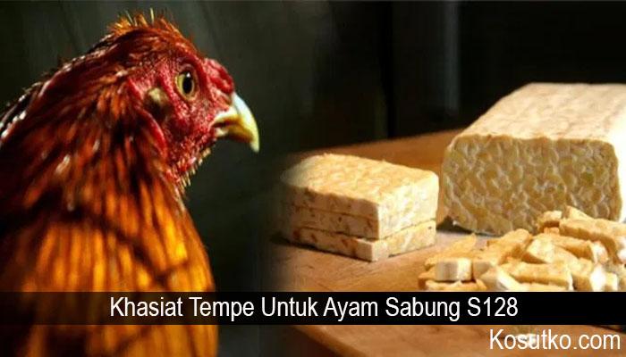 Khasiat Tempe Untuk Ayam Sabung S128