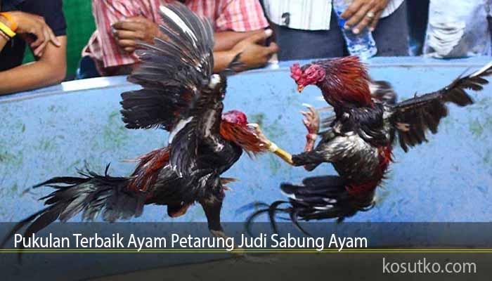 Pukulan Terbaik Ayam Petarung Judi Sabung Ayam