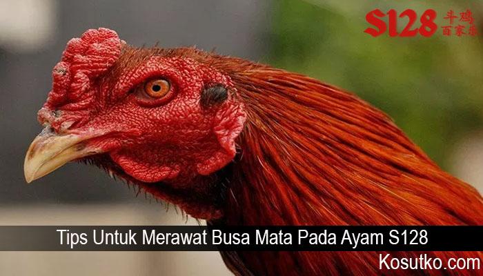 Tips Untuk Merawat Busa Mata Pada Ayam S128